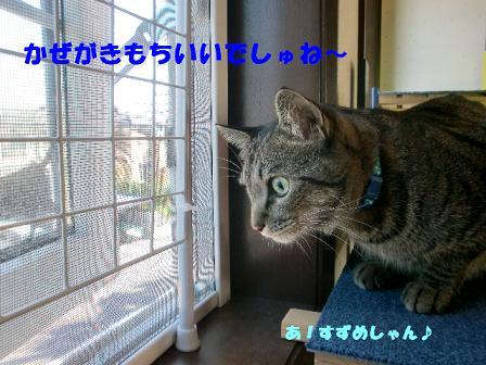 コピー ~ CIMG1460