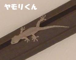 コピー ~ CIMG1507