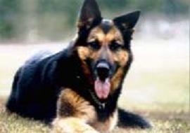 名犬サーブ