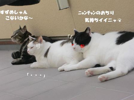 コピー ~ CIMG0385