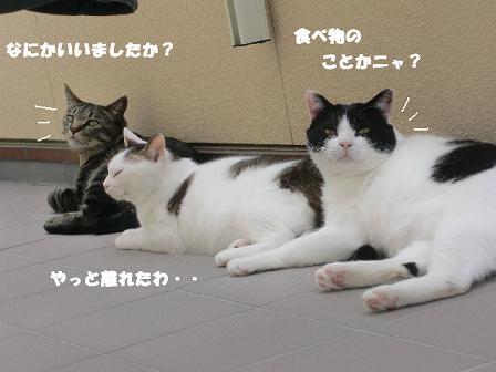 コピー ~ CIMG0384