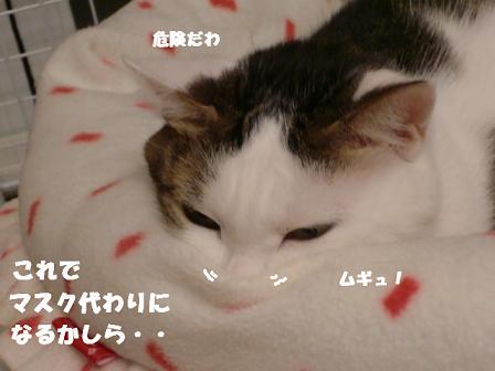 コピー ~ CIMG1261
