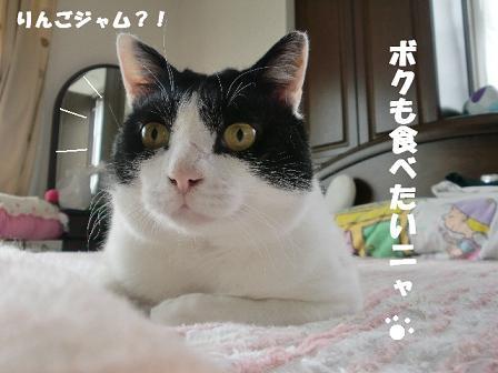 コピー ~ CIMG0449