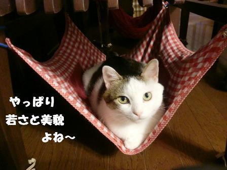 コピー (2) ~ CIMG0638