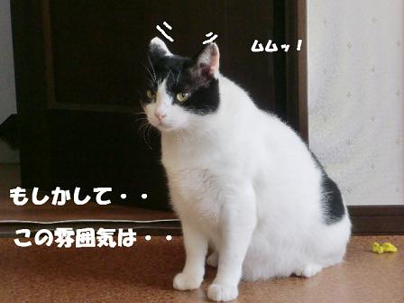 コピー ~ CIMG1635