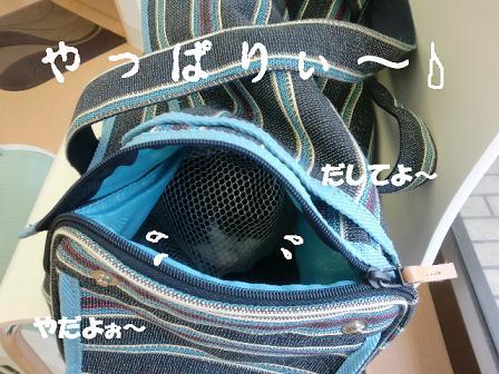 コピー ~ CIMG1632