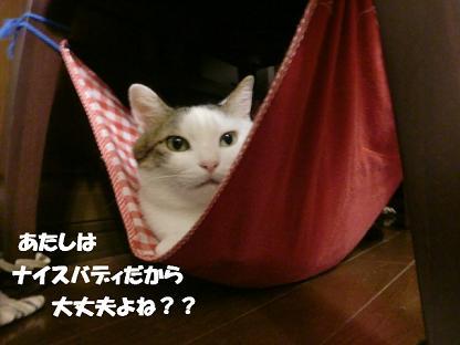 コピー ~ CIMG0643