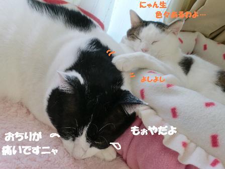 コピー ~ CIMG1482
