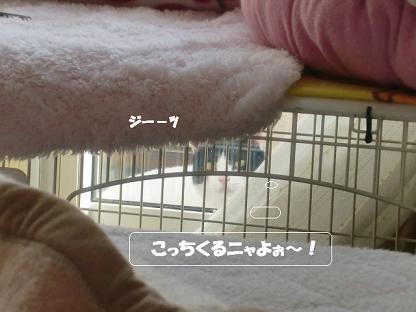 コピー ~ CIMG1639