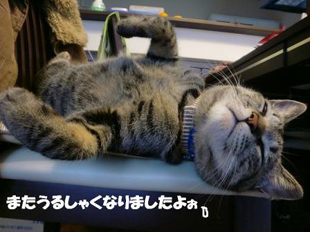 コピー ~ CIMG0014