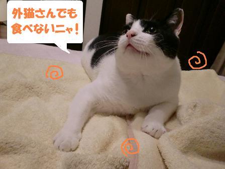 コピー ~ CIMG0592