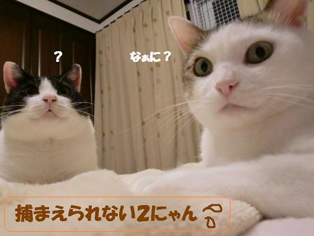 コピー ~ CIMG0618