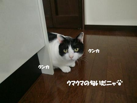 コピー ~ CIMG1025