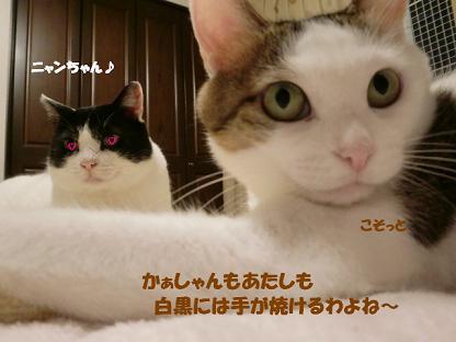 コピー ~ CIMG0616