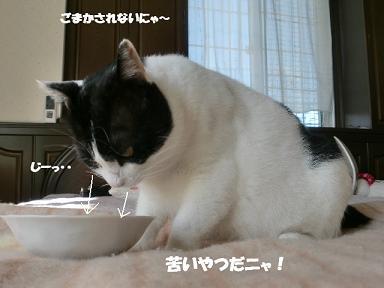 コピー ~ CIMG1463