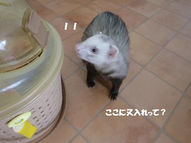 コピー ~ CIMG1748