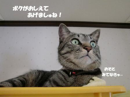 コピー ~ CIMG0111