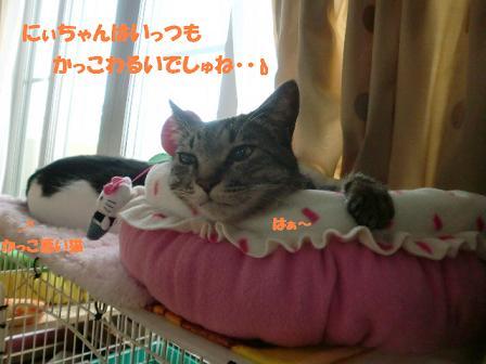 コピー ~ CIMG0349
