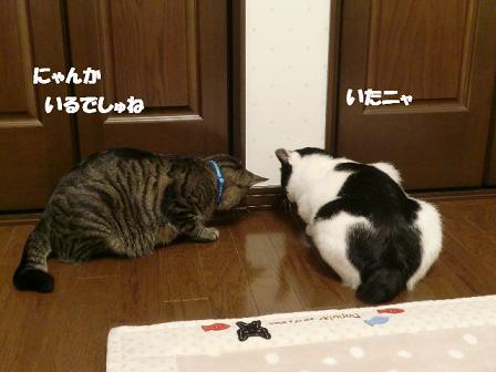 コピー ~ CIMG0460