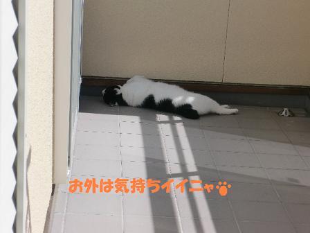 コピー ~ CIMG1472