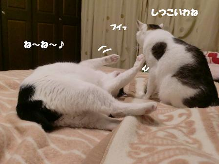 コピー ~ CIMG1574