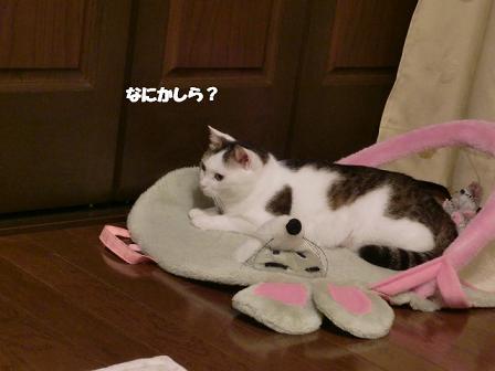 コピー ~ CIMG0461