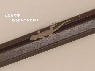 コピー ~ CIMG1506