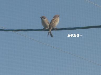 コピー ~ CIMG1872