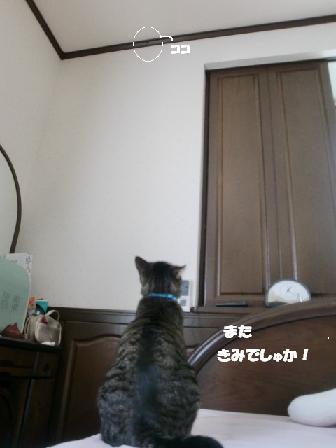 コピー ~ CIMG0697
