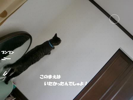 コピー ~ CIMG0698