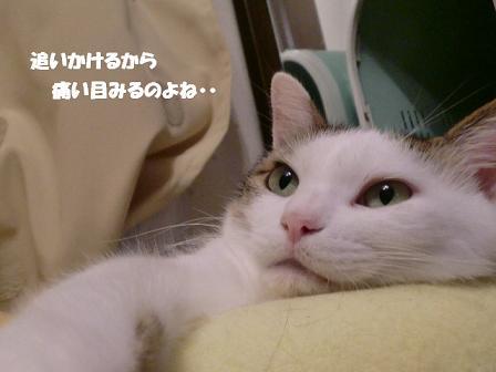コピー ~ CIMG0872