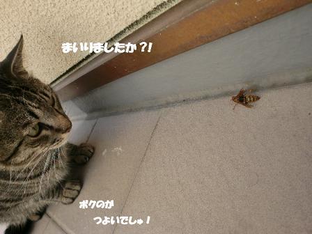 コピー ~ CIMG1695