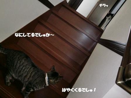 コピー ~ CIMG0139