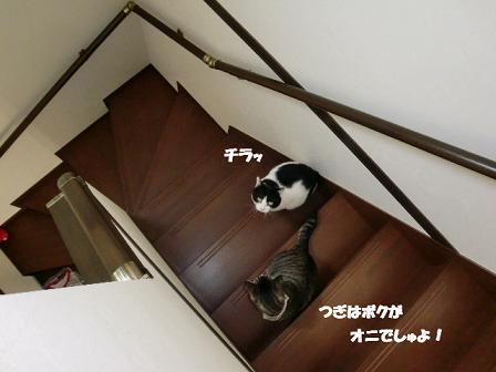 コピー ~ CIMG0136