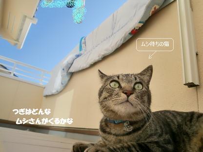 コピー ~ CIMG1960