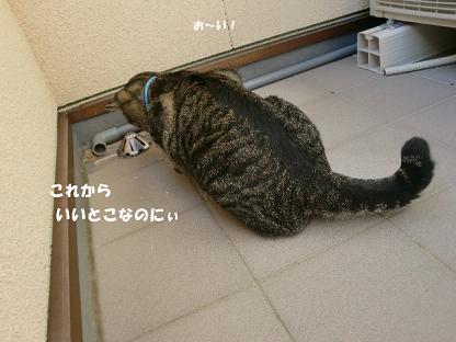 コピー ~ CIMG1992