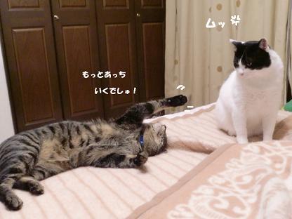 コピー ~ CIMG2023