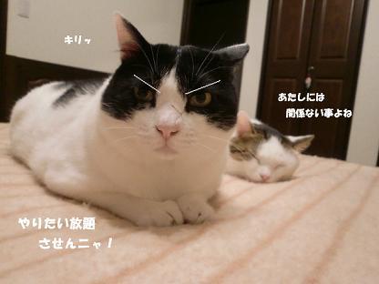 コピー ~ CIMG1832