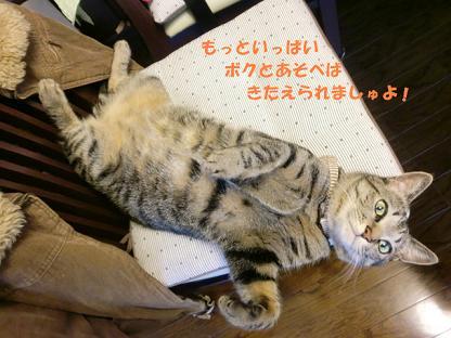 コピー ~ CIMG0013