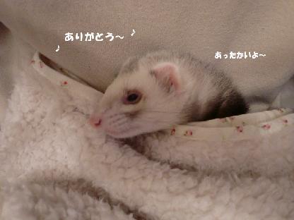 コピー ~ CIMG2193
