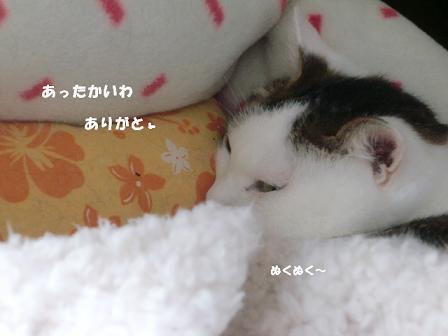 コピー ~ CIMG2233