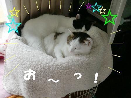 コピー ~ CIMG2234