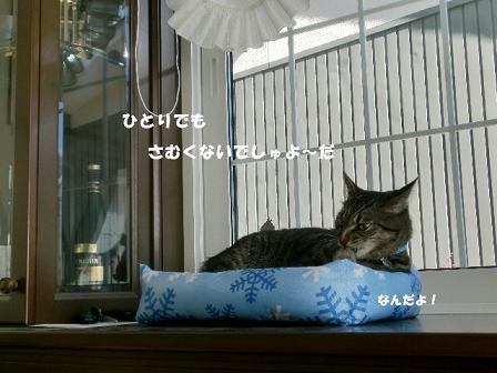コピー ~ CIMG2245