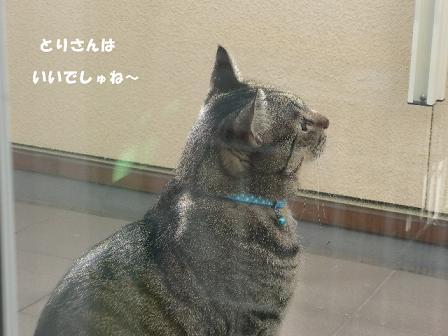コピー ~ CIMG1747