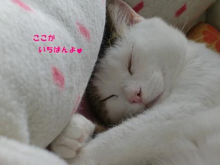 コピー ~ CIMG2189