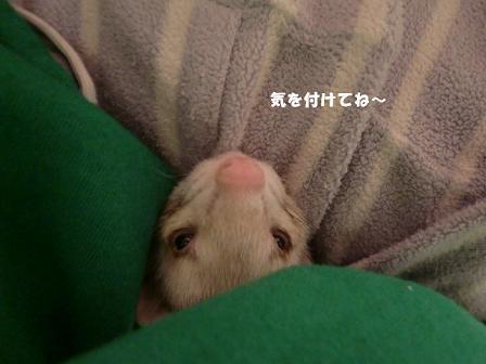 コピー ~ CIMG0073