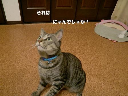 コピー ~ CIMG2109