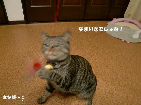 コピー ~ CIMG2108