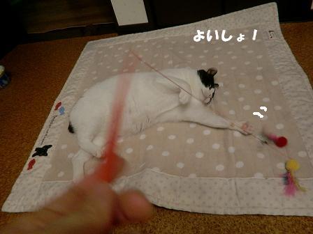 コピー ~ CIMG2124