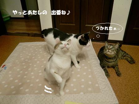 コピー ~ CIMG2103